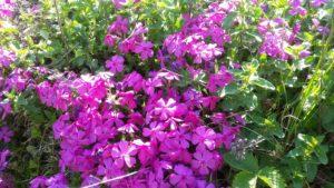 Blumenpracht im Juni