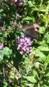Blumen im August mit Schmetterling